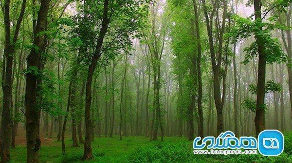 جنگل گیسوم، جاده ای جنگلی تا دریا