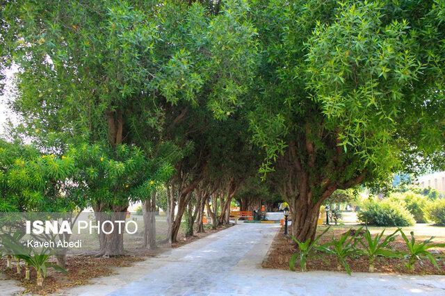 راه اندازی واحد فوریت های پزشکی درختان تبریز